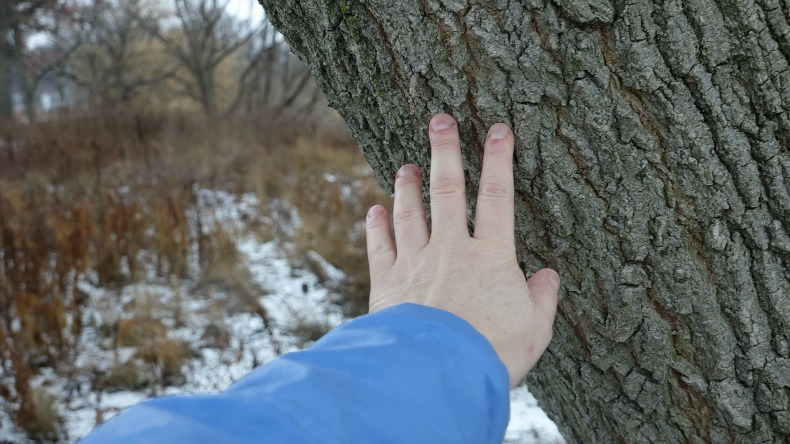 Touching a tree.
